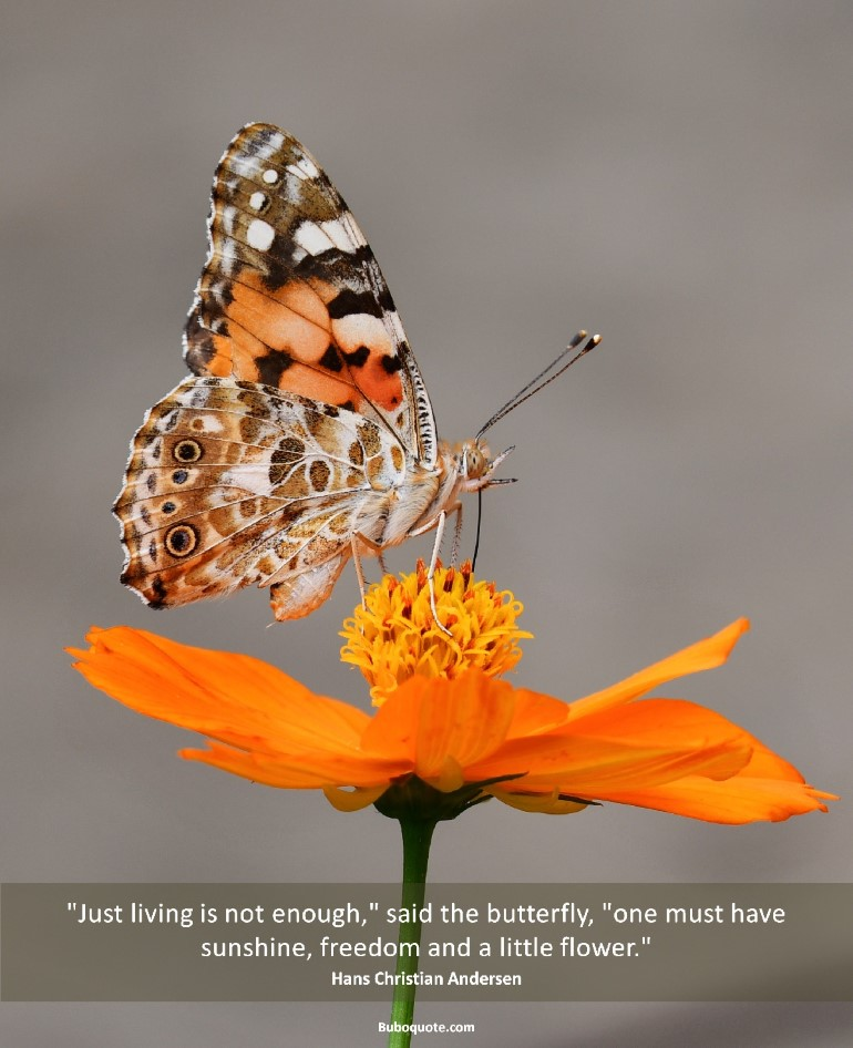 """Just living is not enough,"" said the butterfly, ""one must have sunshine, freedom and a little flower."""