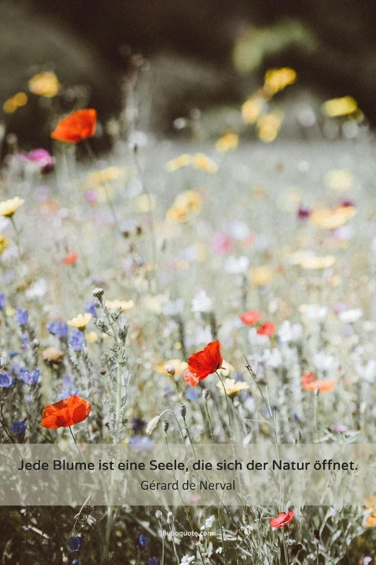 Nerval Jede Blume Ist Eine Seele Die Sich Der Natur öffnet